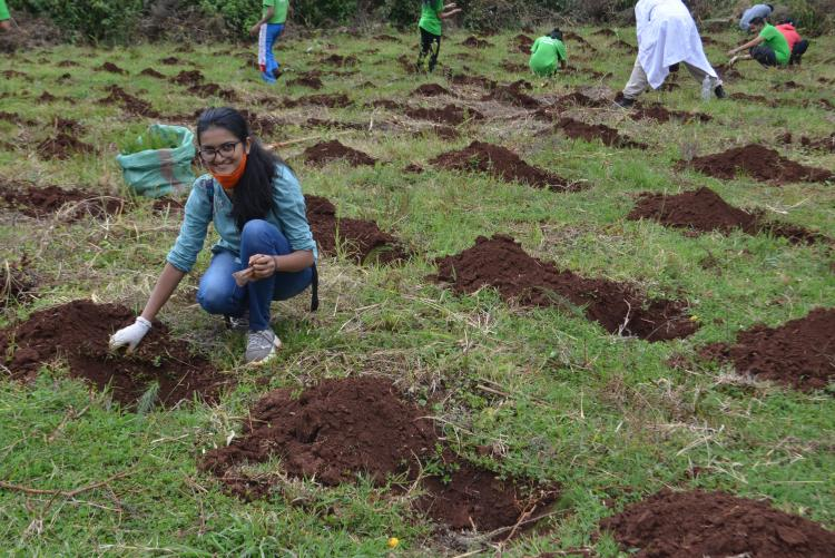 tree planting4
