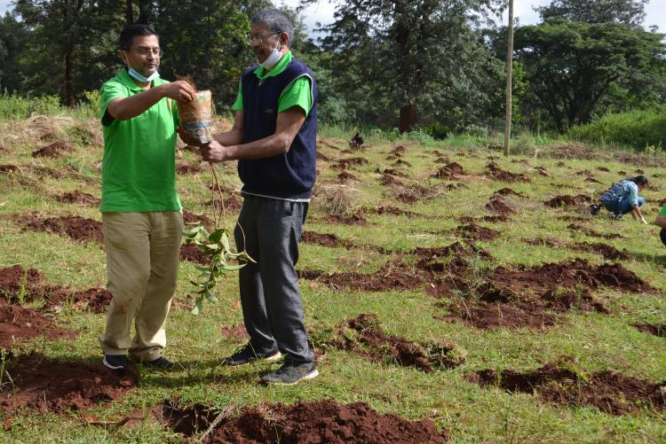 tree planting6