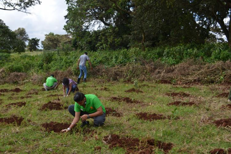 tree planting7