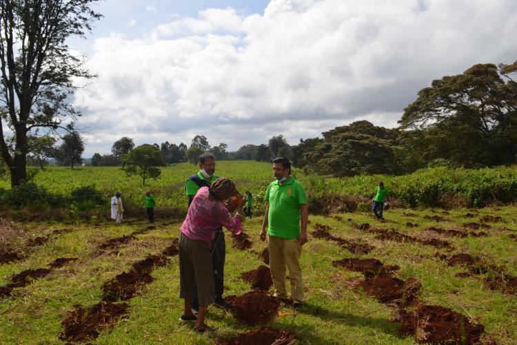 tree planting9