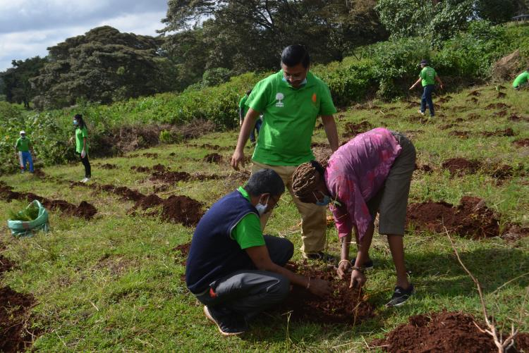 tree planting10