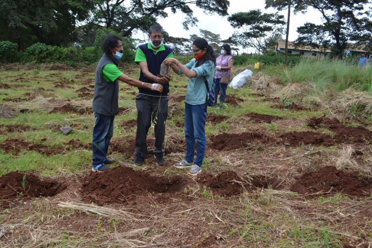 tree planting12