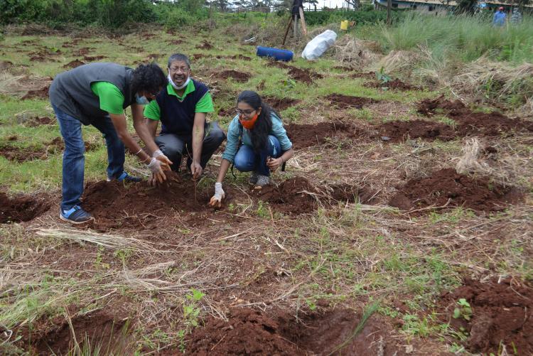 tree planting13