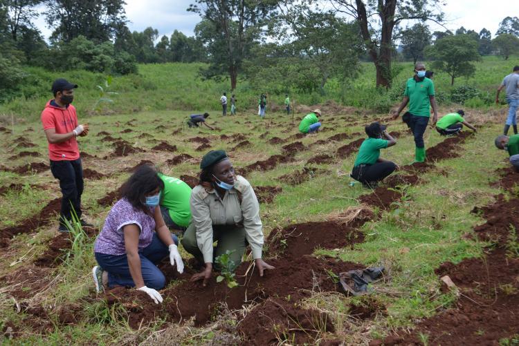 tree planting14