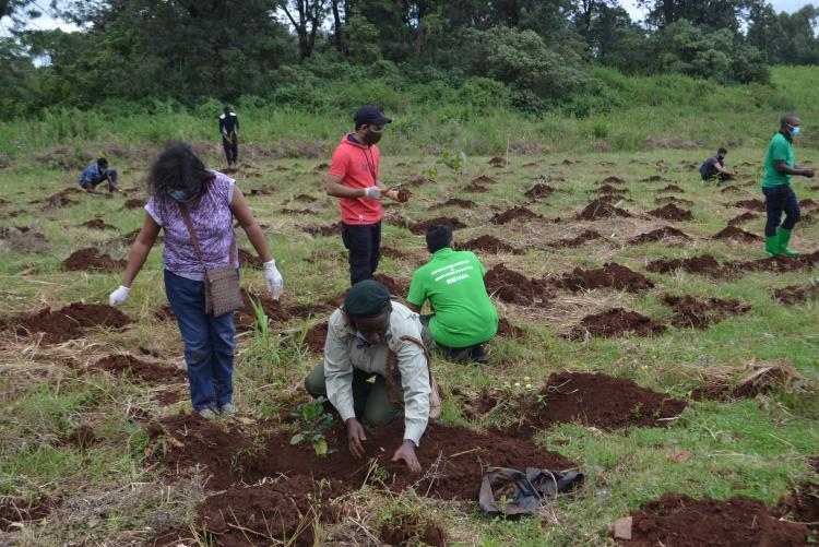 tree planting15