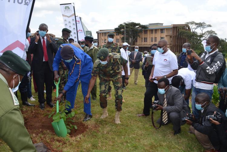 Tree planting3