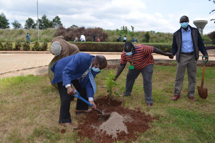 Tree planting8